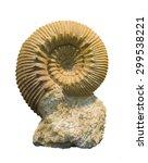 Fossilized Ammonite Isolated O...