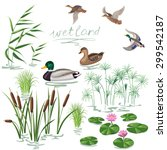 Set Of Wetland Plants And Birds....