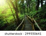 rainforest at angka nature... | Shutterstock . vector #299550641