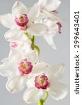 A Breathtaking Orchid Displays...