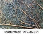 Delicate Root System Of A...