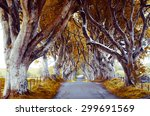 majestic tree alley with old... | Shutterstock . vector #299691569