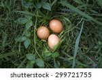 Fresh Chicken Eggs In The Gras...