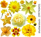Big Yellow Flowers  Collage ...