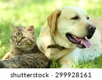 Stock photo friendly dog and cat resting over green grass background 299928161