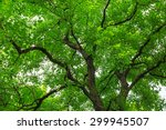green forest trees backgrounds
