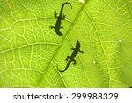 Lizard's Shadow On Leaf
