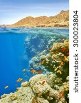 underwater view at coral reef...   Shutterstock . vector #300023804