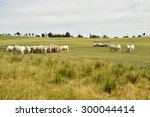 cows in the meadow | Shutterstock . vector #300044414