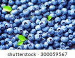 blueberry background. ripe and... | Shutterstock . vector #300059567