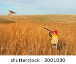 hunter taking aim at rooster pheasant - stock photo
