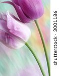 dreamy tulips | Shutterstock . vector #3001186