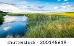 landscape of green marshes and... | Shutterstock . vector #300148619