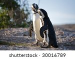 penguins man and woman kiss | Shutterstock . vector #30016789