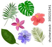 vector set with exotic flowers... | Shutterstock .eps vector #300231341
