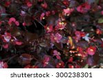 flowers in the garden | Shutterstock . vector #300238301