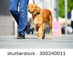 Stock photo man walking the dog in the city 300240011