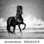 Black Stallion By The Seaside...