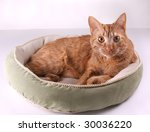 Stock photo cat curled up in a pet bed 30036220