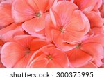 Macro Of Geranium Flowers