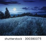 Meadow With Tall Grass On A...