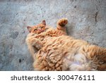 Stock photo red fat cat in the street 300476111