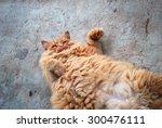 red fat cat in the street   Shutterstock . vector #300476111