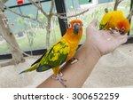 Bird Feeding On Hand
