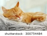 Stock photo red cat resting indoors 300754484