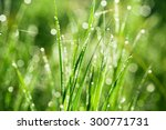 Green Grass With Drops Of...