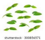 green tea leaf isolated on... | Shutterstock . vector #300856571