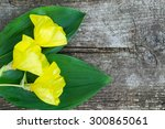 Bright Yellow Evening Primrose...