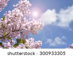 View On The Pink Flowers Of Th...