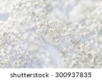 Stock photo background with tiny white flowers gypsophila paniculata blurred selective focus 300937835