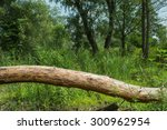 Fallen tree without bark