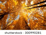 Colorful Tree Branches In Sunn...