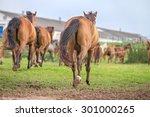 herd of horses going home. | Shutterstock . vector #301000265