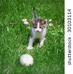 a kitten playing with a ball in ... | Shutterstock . vector #30103114