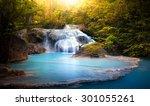 sunlight through tree leaves... | Shutterstock . vector #301055261