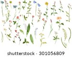 biggest set of watercolor... | Shutterstock . vector #301056809