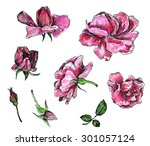 flowers of pink roses  drawn by ... | Shutterstock . vector #301057124