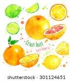 hand drawn watercolor set of... | Shutterstock . vector #301124651