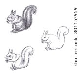 pencil drawing of squirrel on... | Shutterstock . vector #301152959