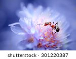Closeup Ant On Beautiful Flowe...