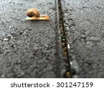 snail waiting and thinking... | Shutterstock . vector #301247159