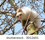 Cat On A Willow