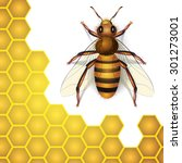 bee and honey cells isolated on ... | Shutterstock .eps vector #301273001
