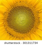 Macro Photography Of A...