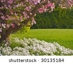 Pink Blooms Adorn A Dogwood...