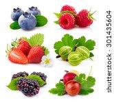 set of ripe summer  blackberry  ... | Shutterstock . vector #301435604